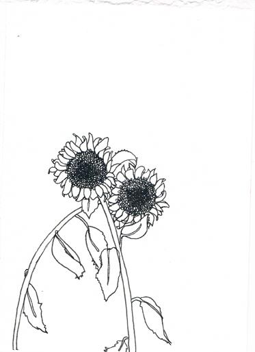 """""""Sunflowers"""" drawing by Matthew de Leon"""